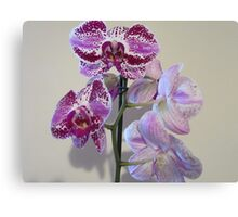 Front and Back (Orchid) Canvas Print