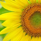 You Are The Sunshine of My Life by lorilee