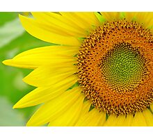 You Are The Sunshine of My Life Photographic Print