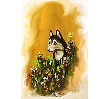 Siberian Husky~~Dog~In Flowers~~~love Photographic Print