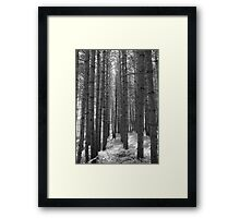 Pine Tree Pathway - Black & White Framed Print