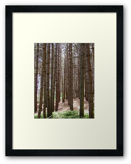 Pine Tree Pathway by jenndes