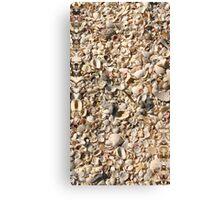 Seashell Sand, Gasparilla Island, Florida Canvas Print