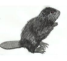 beaver  Photographic Print
