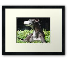 Embracing the Sun's Warmth Framed Print