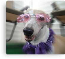 Canine Diva Canvas Print