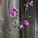 Against the Fence by heatherfriedman