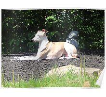 Canine Karma Poster