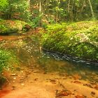 Stream with rock covered in moss & ferns by Michael Matthews