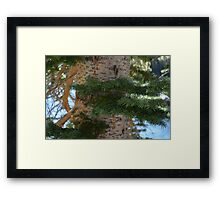 Evergreen Growth Framed Print