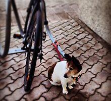 dog by 迷迷 黃