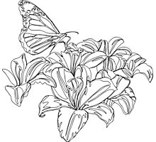 Butterflies and Flowers Continuous Line Drawing Photographic Print