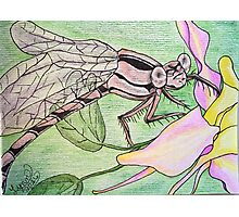 Brown dragonfly on columbine series #7 Photographic Print