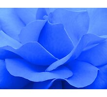 A blue rose © Photographic Print