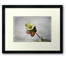 Vintage Helleborus - JUSTART ©  Framed Print