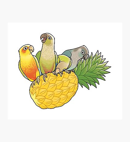 Green Cheek Paradise Photographic Print