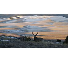 A Buck At Sun Rise Photographic Print