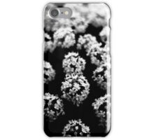 Cow Parsnip Flowers iPhone Case/Skin