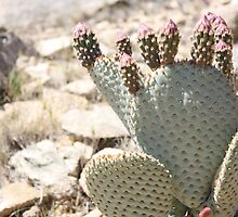 Cactus and Buds by IreKire