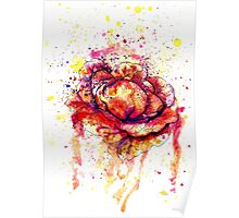 Colorful Cabbage Watercolor 2 Poster