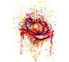 Colorful Cabbage Watercolor 2 Photographic Print