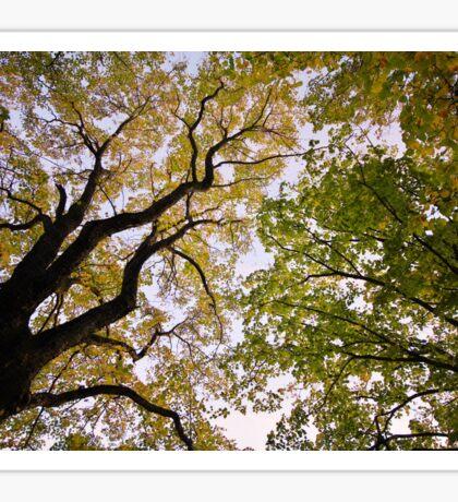 Autumn dusk under the trees Sticker