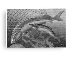 Gator Gar  Canvas Print