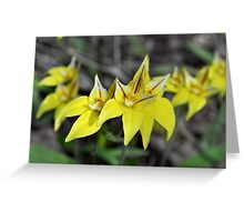 Cow Slip Orchids Busselton W.A. Greeting Card