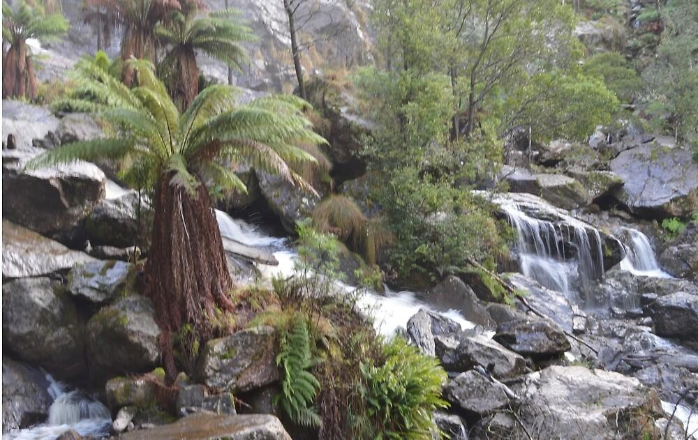 St Columba Falls by Judi Rustage