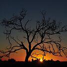 Tree Sunrise Busselton, Western Australia by Coralie Plozza