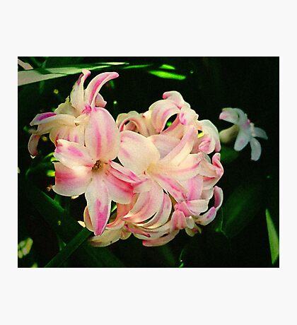 Wild Hyacinth Photographic Print