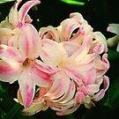 Wild Hyacinth by Rasendyll