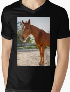 Horse in the paddock Mens V-Neck T-Shirt