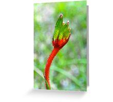 Kangaroo Paw Busselton Western Australia Greeting Card