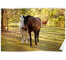 Horses in the paddock Poster
