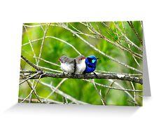 Blue Wren Busselton, Western Australia Greeting Card