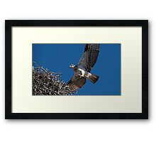 Just checking Framed Print