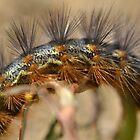 Caterpillar detail by Kate Farkas