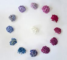Circle of Hydrangea by Vicky Webb