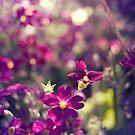 Purple Flowers by Yincinerate