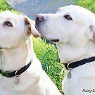 Dixie and Buddy by Rainydayphotos