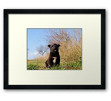 Pet Framed Print