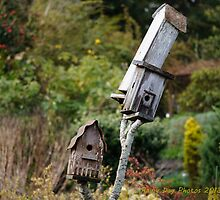 For rent to local bird family: buyer beware! by Kathleen Hamilton