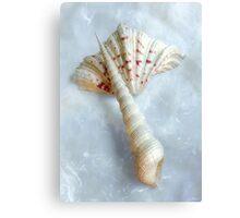 Sea Shells #6 in Color Canvas Print