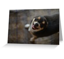 Little dog chihuahua Greeting Card