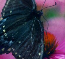 Spicey Swallowtail Butterfly Sticker
