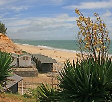 Branksome Dene by RedHillDigital