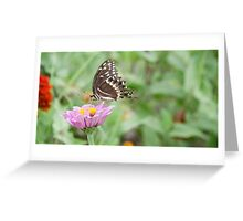 Miss Butterfly Greeting Card