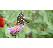 Miss Butterfly Photographic Print