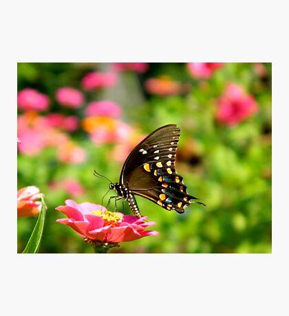 Garden Visitor   ^ Photographic Print